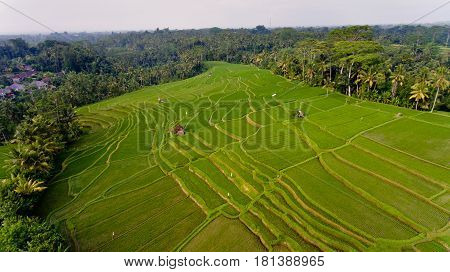 Areal view of Terrace rice fields. Bali Indonesia.