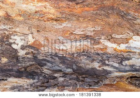 Background of the old trunk of the withered fruit tree covered by cracks and darkened with time