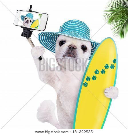 Beautiful surfer dog taking a selfie together with a smartphone. Isoliated on the white bacground.