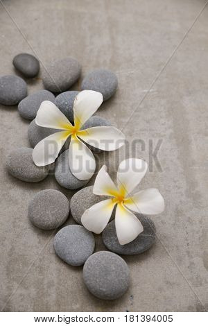 Two frangipani with spa stones on grey background.