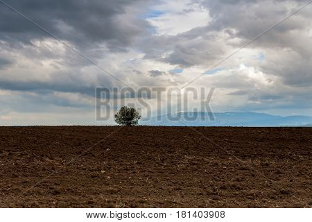 Solitary tree on a hill with mountains in the background in summer