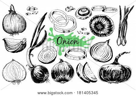 Onion hand drawn graphic set. Full, rings and Half cutout slice. Isolated Vegetable engraved style object. Detailed vegetarian food drawing. Farm market product. Great for menu, label, icon