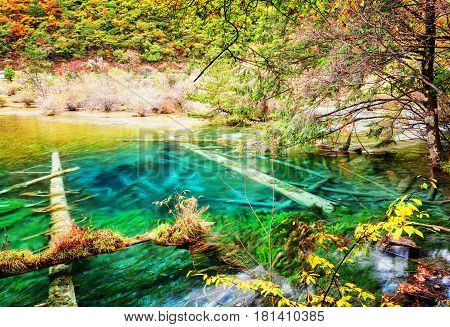 Beautiful Azure Lake With Submerged Tree Trunks In Autumn Forest