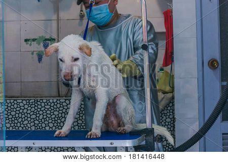 24 Dec,2015,Chongqi, China: vet help taking shower for a Sad white stray street dog