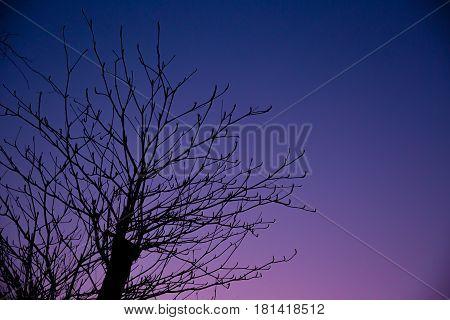 Lonely Night, Summer Fall Season Beautiful Dusk Sky With Silhouette Tree.