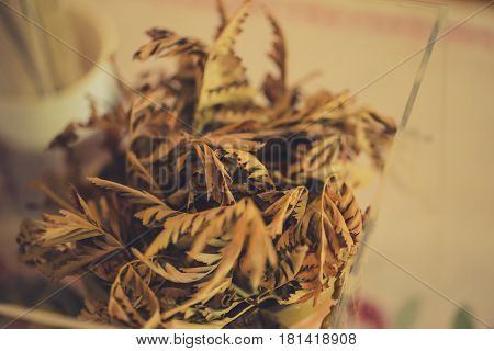 Closeup Dried Plant, Home Hipster Indy Nature Style Decoration Vintage Color Tone.