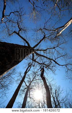 Baobab Trees In Ankarana National Park, Madagascar Wilderness