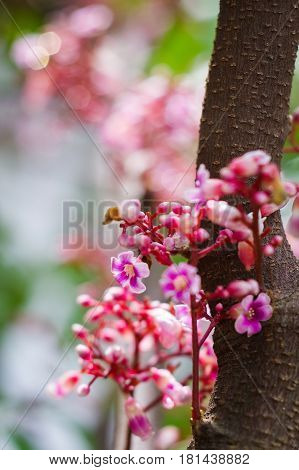 Blooming star fruit flowers on tree branch with brilliant bokeh