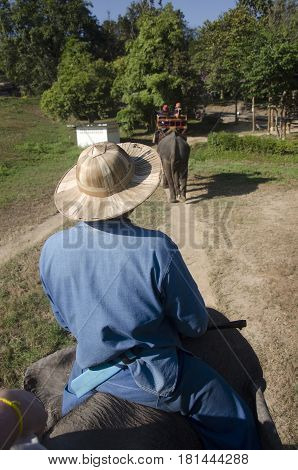 Thai Man Mahout Riding Elephant Service People Tour Around Forest Near Thai Elephant Conservation Ce