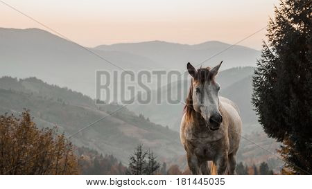 Horse Pasture Morning Fog Dew