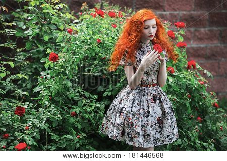 Romantic woman with red curly hair in a floral dress on a background of a bush with red roses. Red-haired romantic girl with pale skin blue eyes bright unusual appearance and red lips and thin waist in the garden. Romantic model. Romantic near roses flowe