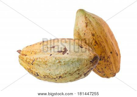 Cacao fruit raw cacao beans Cocoa pod on white background