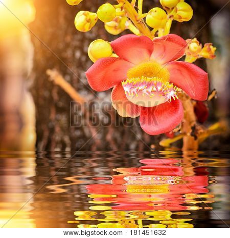 Beautiful Sal Flowers With Bokeh Background And Reflection