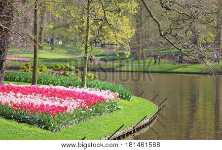 The Tulip Flowerbed At The Lake In The Park