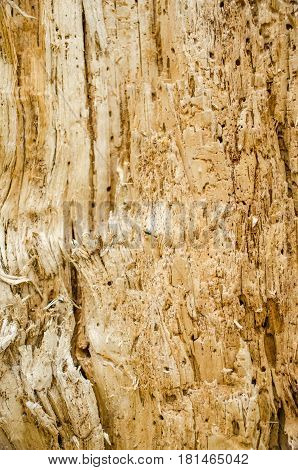Background Of A Tree Bark.