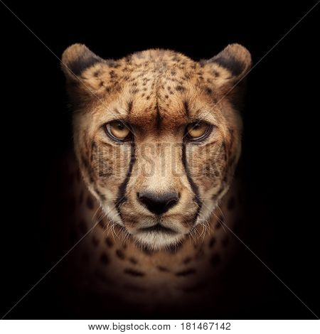 The cheetah face isolated on black background