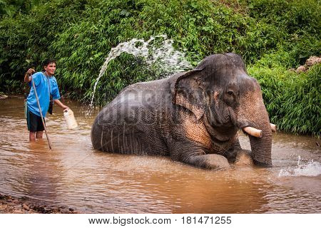 Bathing Elefant Mahout, Khao Sok Sanctuary, Thailand