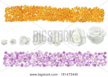 Banner with Purple Heliotrope flower, orange yarrow achillea and white rose  isolated over background