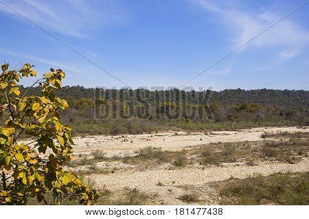Dry River Bed In Kalesar National Park India