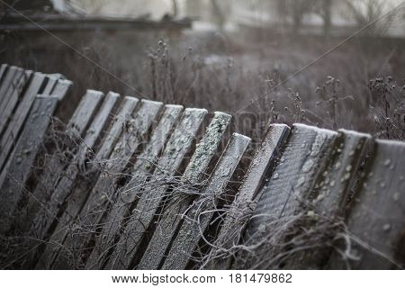 Fog on the street. Smog in the city. Hoarfrost on trave.Holodnaya wet weather. The snow on the grass and the fence.