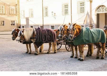 Horse. Entertainment of tourists (horseback riding) in the Austrian city of Salzburg - hometown of Mozart. Vacation, holidays, attractions.