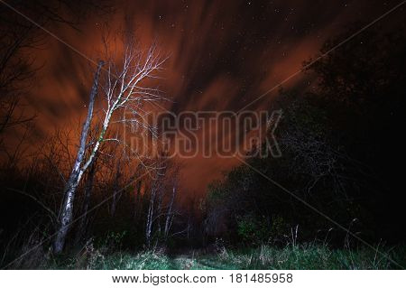 Gloomy horror night sky over a tree in a field. The beautiful night scenery. Slow shutter speed. Spectacular clear starry sky. Scenic view. Horror in the street. Horror concept