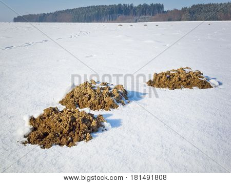 Molehills In The Snow