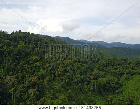 Aerial drone photo of tropical rainforest jungle and palm oil plantations