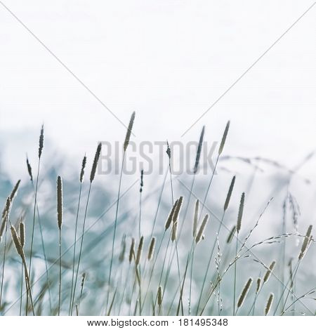 Summer abstract pastel blurred herb nature background. Square image with space for copy soft selective focus.