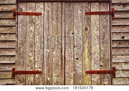 Four large rusted industrial hinges on a set of double doors of old weathered vertical wood planks with paint peeled off