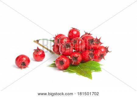 Red Hawthorn Berries With Leaves