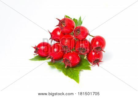 Hawthorn Berries With Leaves, Close-up