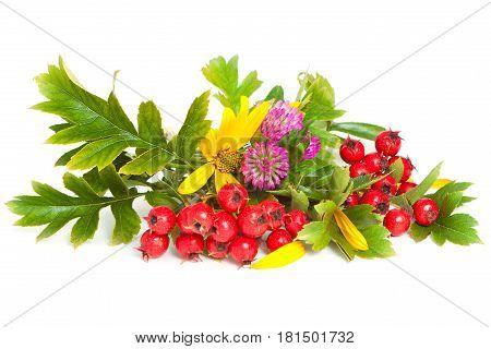 Hawthorn, Flowers Of Clover And Jerusalem Artichoke