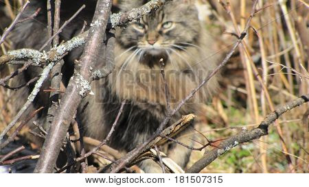 cat hiding branches grass  trees hunting  blend