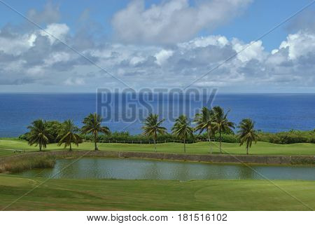 Coconut trees by the seaside, Rota Coconut trees lined up near a pond at a golf course with the blue waters of the Pacific Ocean beyond.