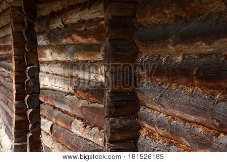 The wall of old rural economic construction is made of logs. The dry moss is a sealant between logs.