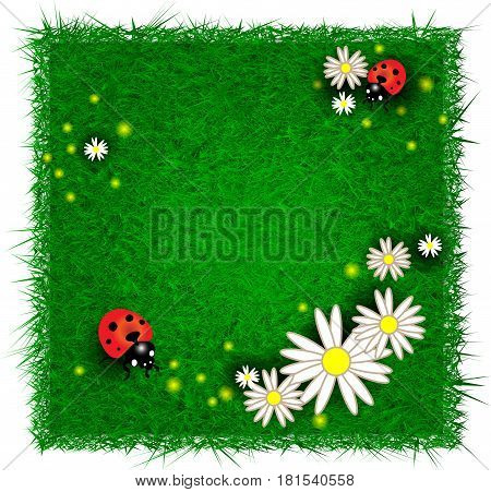 Beauty design template with flowers and ladybugs