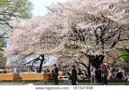 Tokyo Japan - April 9 2016: Shinjuku Gyoen National garden in spring season with cherry blossom (Sakura). this area is popular viewpoint of sakura at Tokyo.