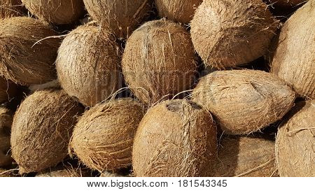 Selling coconuts in shop. Coconuts in pile closeup photo