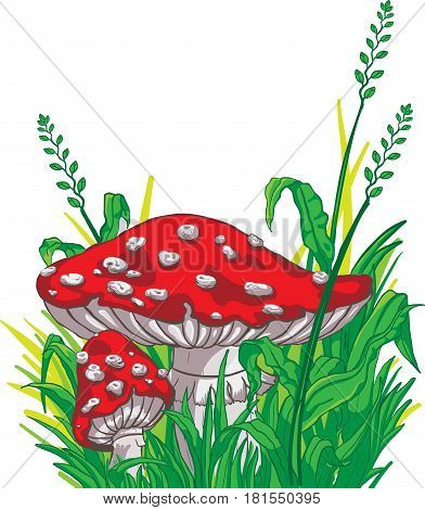 Large amanita grows among grass and flowers