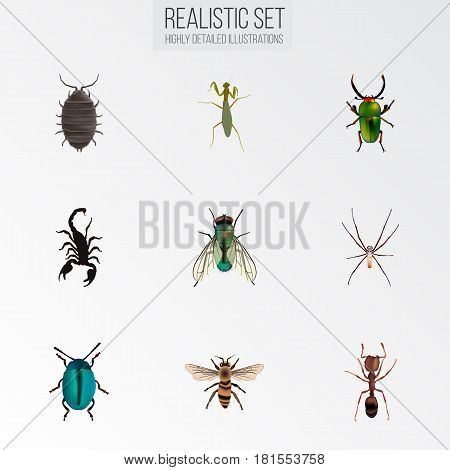 Realistic Wisp, Bug, Emmet And Other Vector Elements. Set Of Bug Realistic Symbols Also Includes Scorpion, Grasshopper, Wisp Objects.