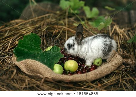 Cute Rabbit Standing With Red Cherry Berries And Green Apples