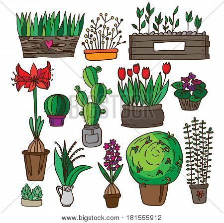 Set of indoor plants. It contains violet, cactus and others in a box, a glass jar, jars, pots. White background. Painted in scribbles. Color version.