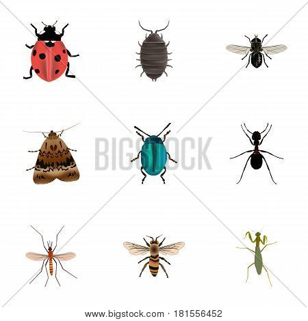 Realistic Midge, Ant, Grasshopper And Other Vector Elements. Set Of Hexapod Realistic Symbols Also Includes Gnat, Blue, Ladybug Objects.