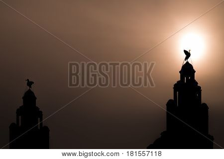Silhouette Of A Liver Bird