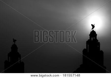 Silhouette Of A Liver Bird (monochrome)
