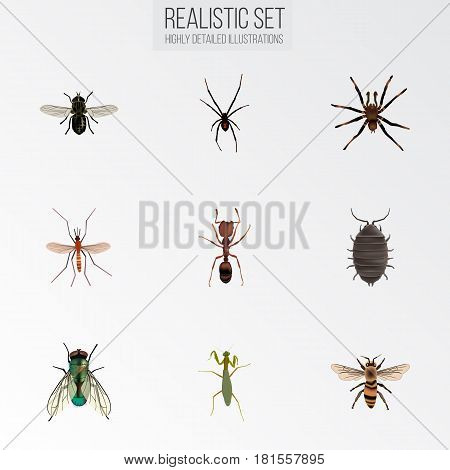Realistic Gnat, Grasshopper, Emmet And Other Vector Elements. Set Of Bug Realistic Symbols Also Includes Jewel, Spinner, Alive Objects.