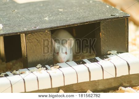 white mouse in house outdoor landscape .