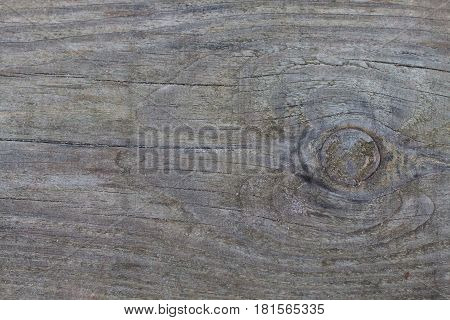 Background of wooden boards with a bough.