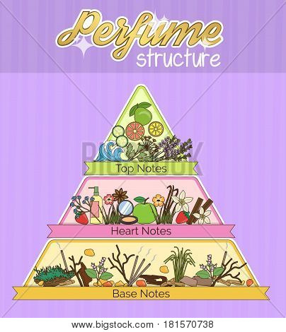 Aromatic structure notes guide for perfume, scent and aroma infographic poster. Top, heart, middle and base notes pyramid chart with examples of popular aroma essenses.